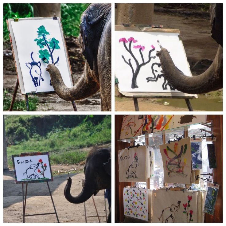 Artist by Carlos VilaHave you ever seen a painting of an elephant? Probably. What about a picture of an elephant painting a painting of an elephant? No? Well meet Suda who lives in Maetaeng Elephant Park in Chiang Mai, Thailand.