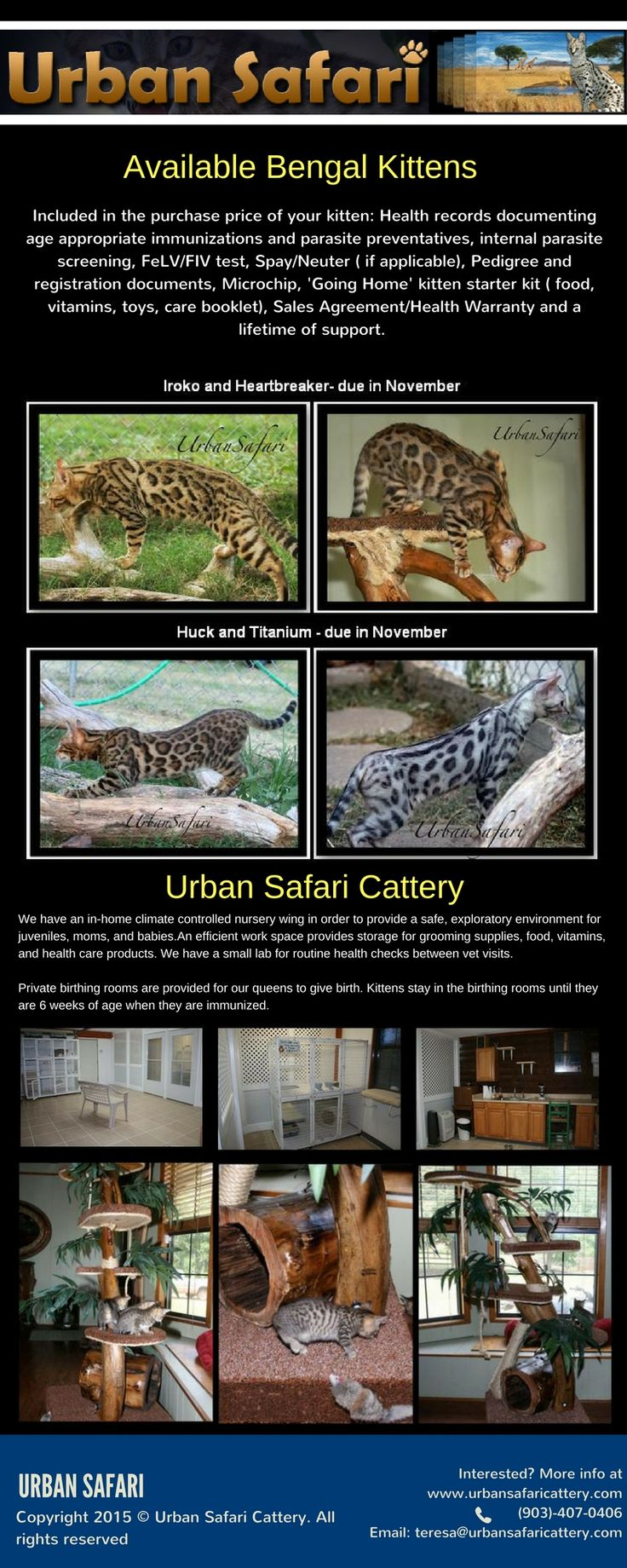 Welcome to the Urban Safari Cattery, your best source for the finest Savannah and Bengal cats and kittens for sale.Home of the finest Savannah cats and Bengals cats. Please use the links on this page to begin your safari, or use the link below to see the newest Savannah kittens for sale and Bengal kittens for sale. To know more about Buy An Exotic Cat , call us today at (903) 407-0406