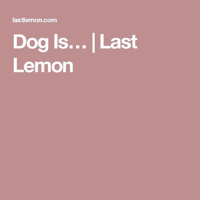 Dog Is… | Last Lemon