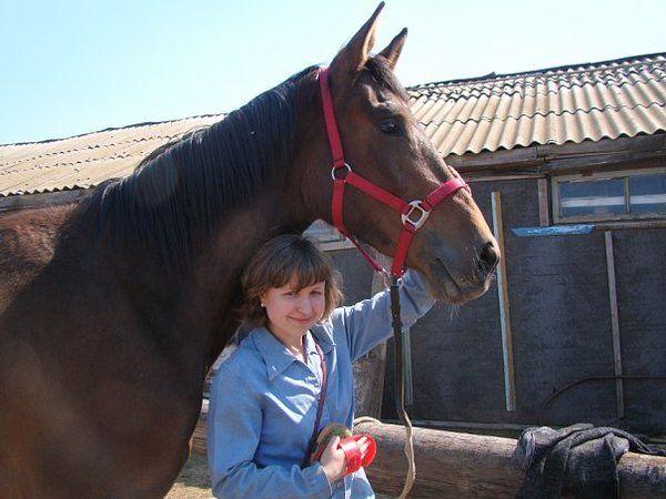 Интересные факты о лошадях (5) кони, лошадь, интересное, познавательно, видео, длиннопост