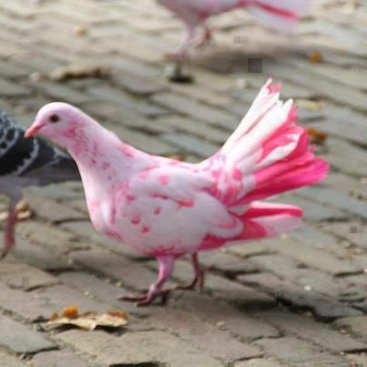 I mean if you are going to be pigeon, a pink one is best~#pinkladyofrealestate