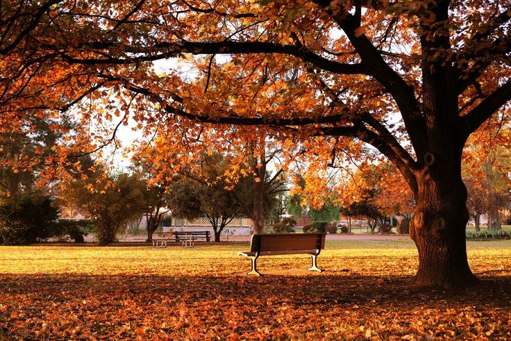 Robertson Park, Mudgee. By Amber Hooper