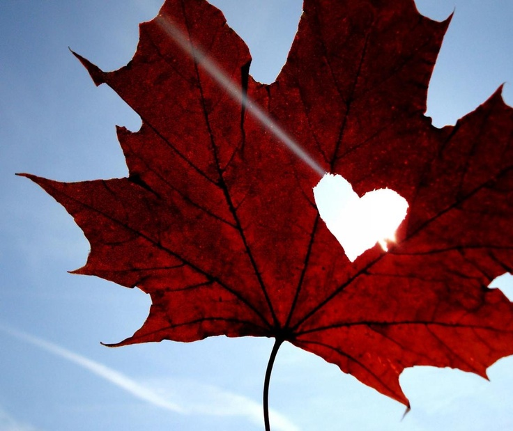 Image result for cool canada leaf
