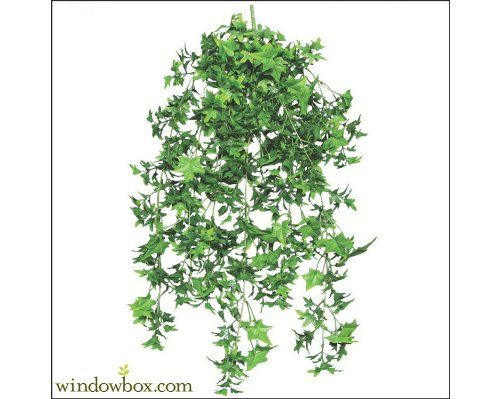 30 Inch Artificial English Ivy Outdoor Rated *** You can find out more details at the link of the image.