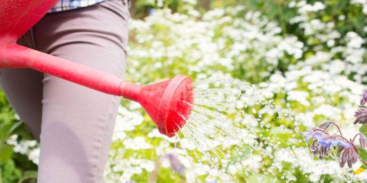 Melhore a água e combata pragas das plantas com... vinagre!   SAPO Lifestyle