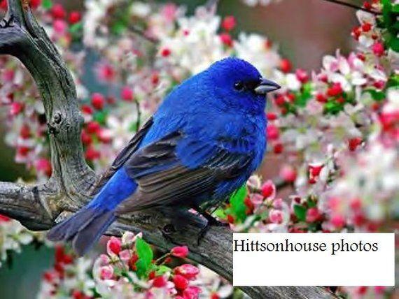 Bluebird Photo Copy – Products
