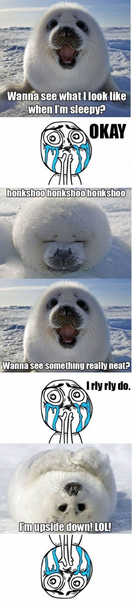 Excuse me while I sob at your adorableness, Mr. Baby Seal.