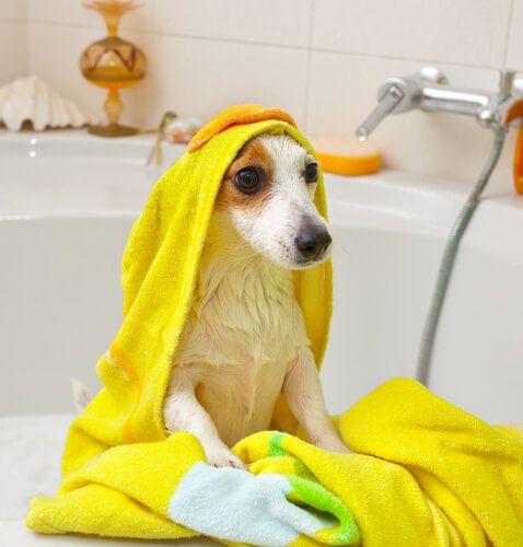 13 best for the love of dogs images on pinterest doggies puppies como dar banho em um cachorro de pelo curto solutioingenieria Choice Image