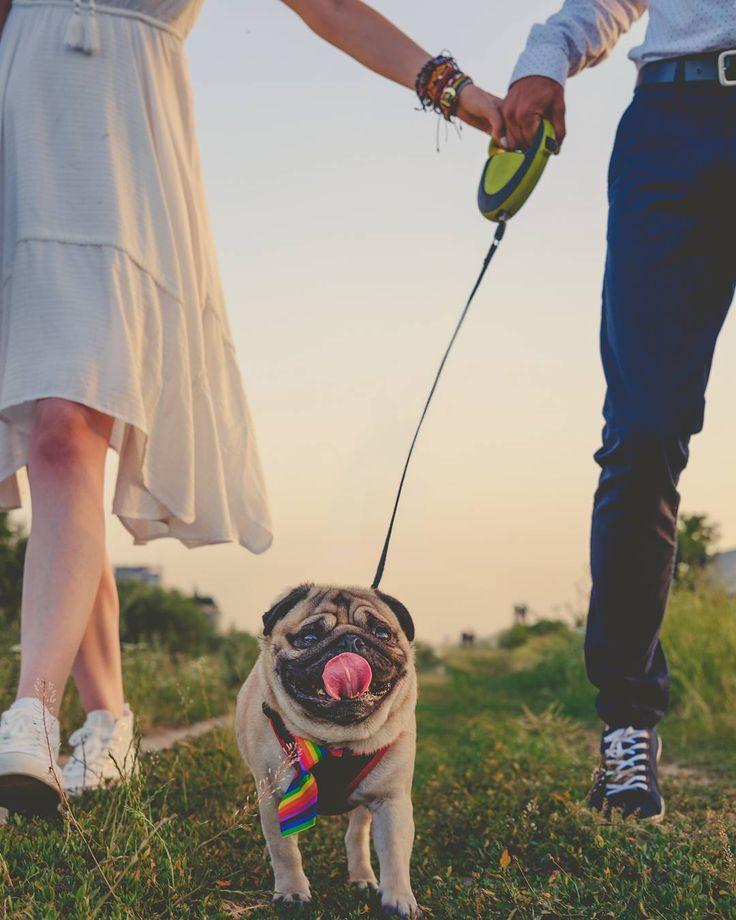 Wedding time! ❤ #mauricethepug #iulianmarcu #wedding #weddingtime #love #loveisintheair #happy #summer #sunnyday #joy #happydog #myhumans #photosession #weddingsession #puglife #pugchat #pug #dog #mops #pugstory