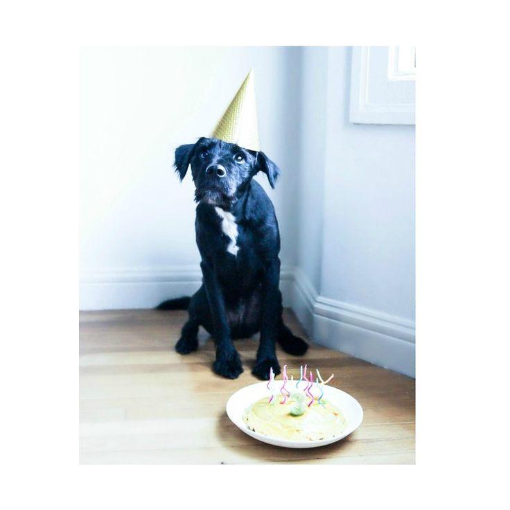 Celebrate your dog!