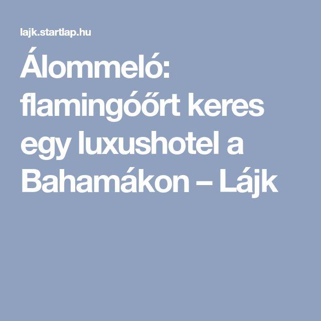 Álommeló: flamingóőrt keres egy luxushotel a Bahamákon – Lájk