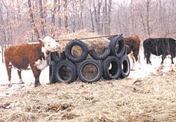 Indestructible Bale Feeder Made From Old Tires