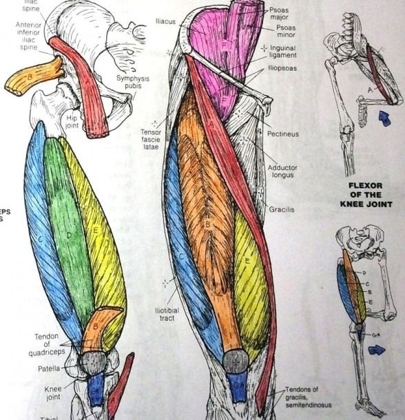 Netter\'s Anatomy Coloring Book #coloring #coloringpages ...