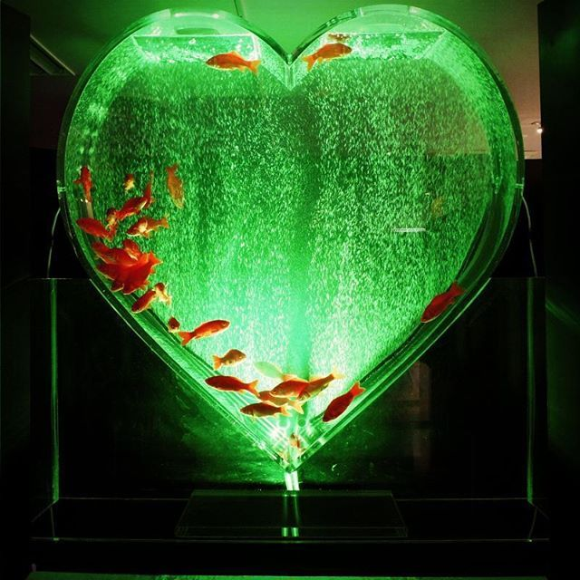 【harucountry】さんのInstagramをピンしています。 《ミヤテレアクアリウム #ミヤテレアクアリウム #仙台#アクアリウム #アクアリウム展 #ハート #ハート型 #水槽 #水槽レイアウト #金魚 #泡 #バレンタイン #instagood #aquarium #goldfish #heart #aquagram #valentine》