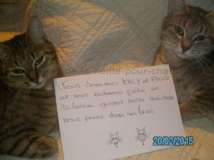 « We are Kaly and Fauve and we like to fart in silence when our mistress takes us in her arms. » #lolcats #shameyourpet #shameyourcat #cat #cats #chats