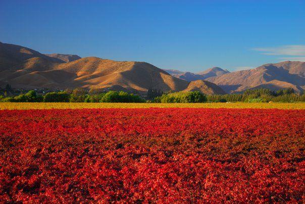 Elqui Valley, Coquimbo Region, Chile.