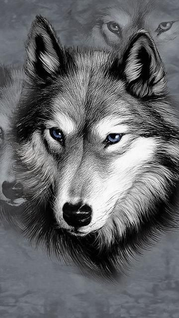 Wolf Pencil Drawing                                                                                                                                                                                 More
