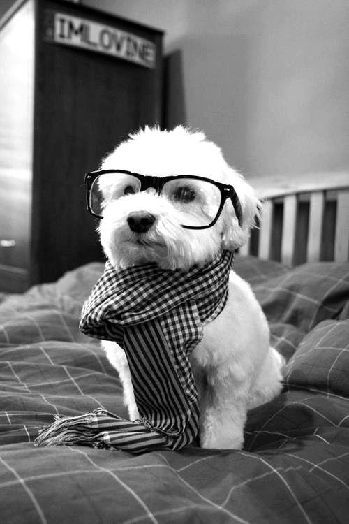 intellettual dog