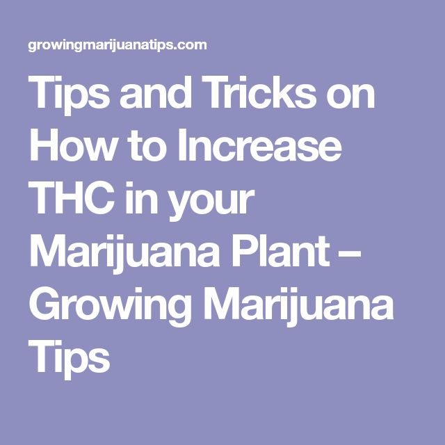 Tips and Tricks on How to Increase THC in your Marijuana Plant – Growing Marijuana Tips