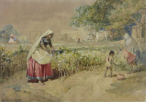 Women engaged in harvesting cotton by William Simpson ca. 1862