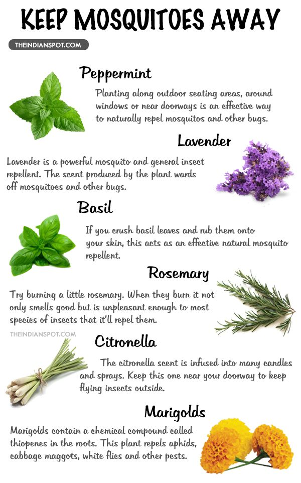 TOP MOSQUITO REPELLENT PLANTS