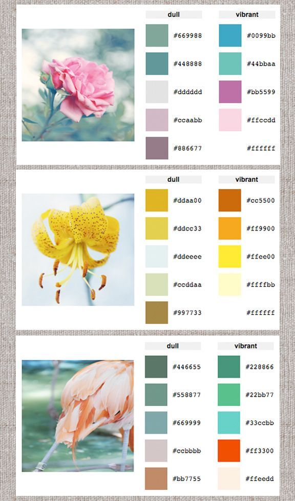 Web Help: Color Palette Generator - Home - Creature ...