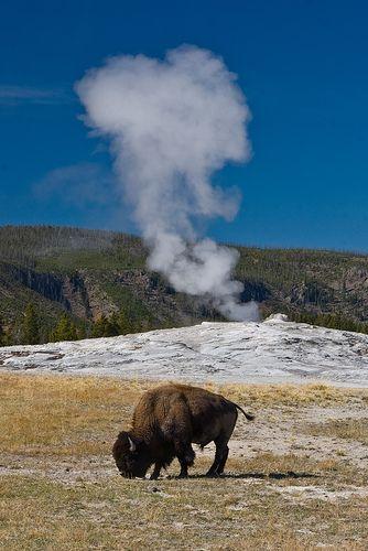 Geyer Basin, Yellowstone National Park, WY
