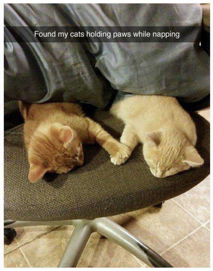 117 FRESH MEMES FOR TODAY #162 #catsfunnymeme