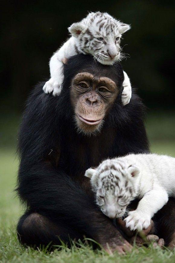 心を溶かす。15組の異種動物たちに芽生えた友情をとらえた素晴らしい写真 : カラパイア