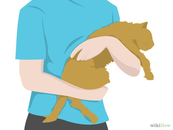 How to Perform CPR on a Cat via wikiHow.com #pets I hope I never need to do this. But if I ever do, here it is.