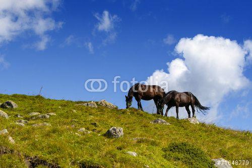 #Freedom #horses