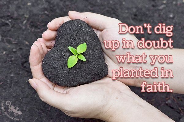"""""""Don't dig up in doubt what you planted in faith.""""  #dig #planted #faith #quotes  ©The Gecko Said - Beautiful Quotes"""