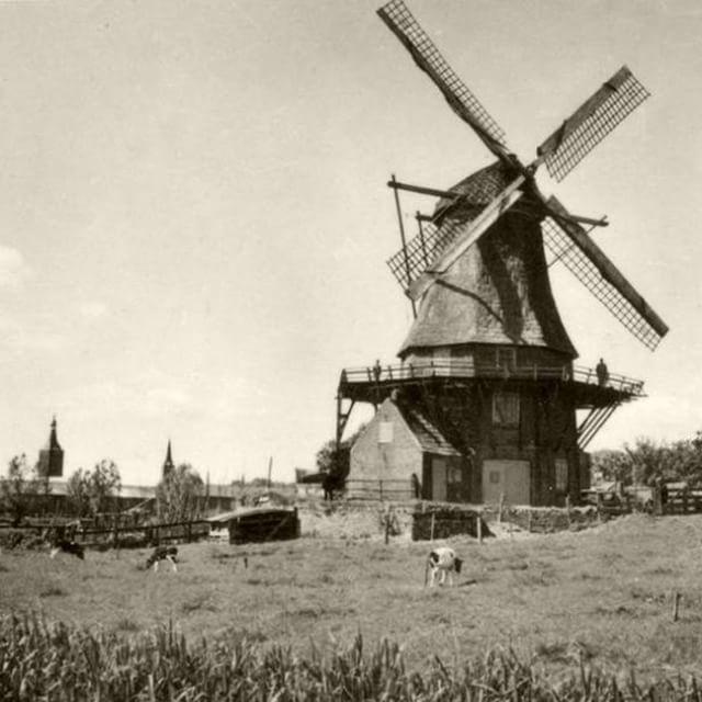 Morgen begint het Eulfeest (hooi-feest) in Hasselt. Vanaf de molen iedereen een…