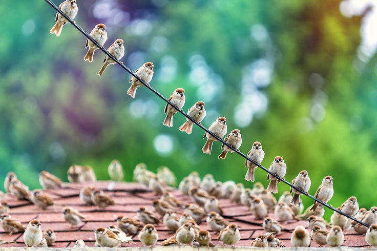 A flock of sparrows by Reonis  on 500px
