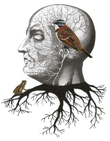 Surreal Art Print  Bird Collage Reproduction  Nature by sarahogren, $15.00