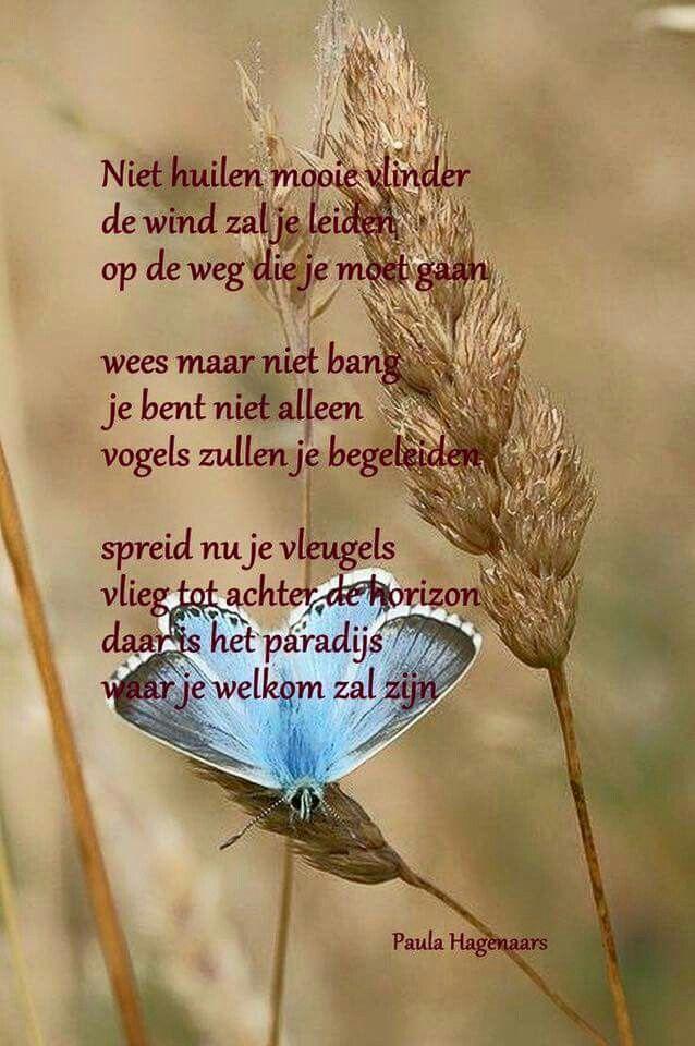 Vlinder - Paula Hagenaars