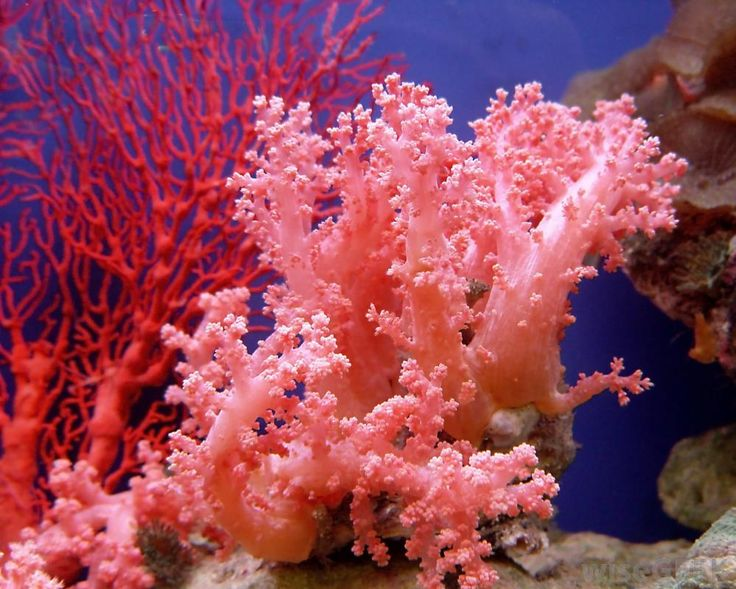 Sponges and coral come from different phyla, which means they have completely different body plans. Additionally, sponges and...