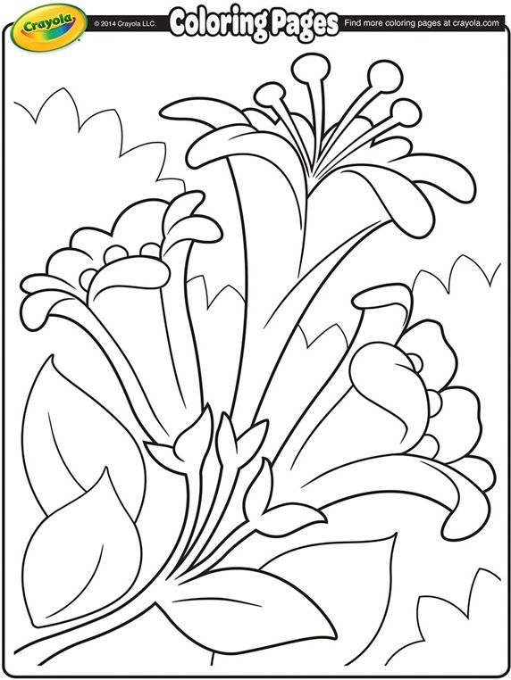 Easter Lilies II on Flower coloring pages
