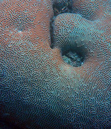 Brain Labyrinth with hole., via Flickr. - W. R. van Straalen