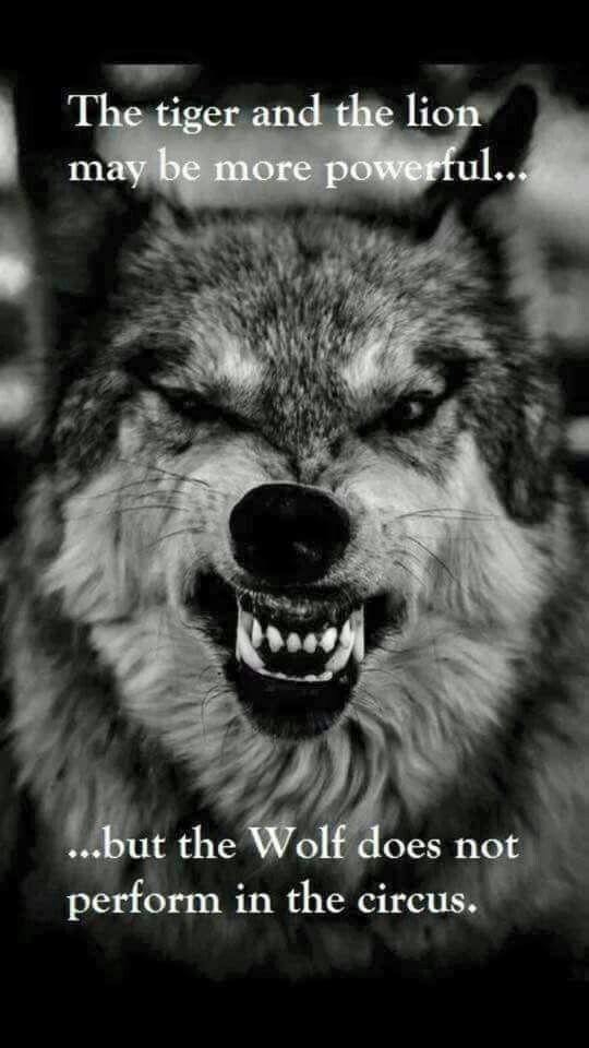 My spirit animal is the wolf I am Christian but I believe in having sprit animals and in proud to be a wolf
