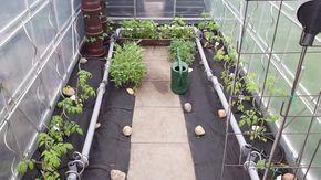 Automatische Bewässerung im Gewächshaus selbstgebaut. Mit einer 12v Pumpe, PVC Schläuche und HT-Rohre kann man eine ganze Menge anstellen. Sehr Effizient.