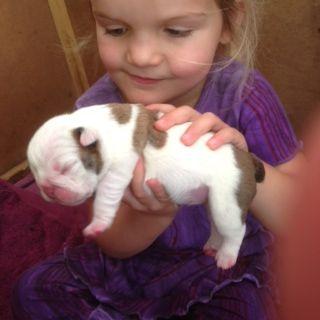 My new bulldog pup - just 2 days old!
