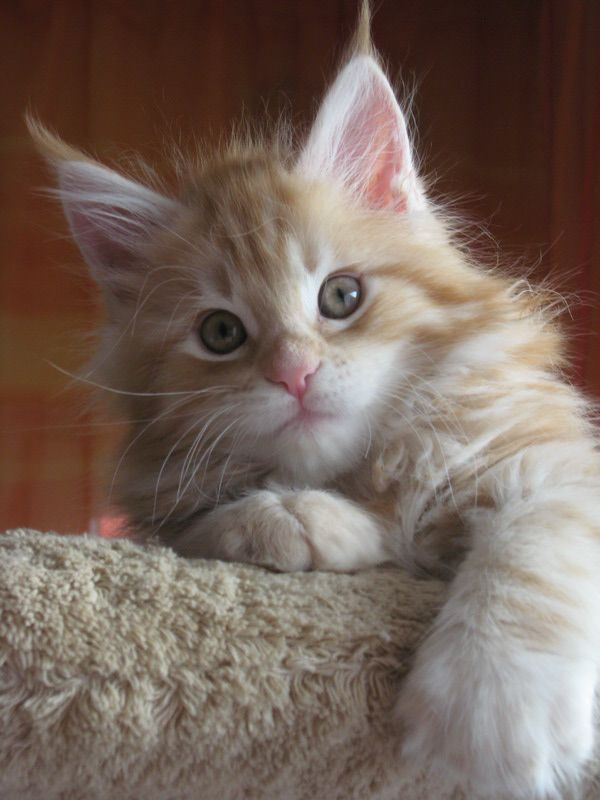 Pin On Katts
