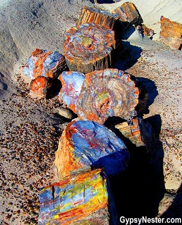 Petrified Forest National Park Arizona colorful tree  | years ago this area was an upright tropical forest. Fallen trees ...