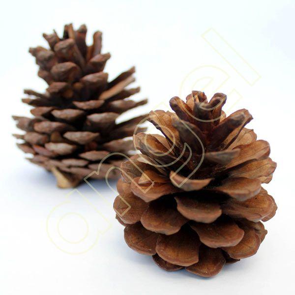 Pine Cones 1Kg - Bulk PINE CONES for sale (1KG - approx 25-35)