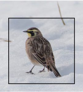 Are You Smarter than Merlin Bird Photo ID? Take the Quiz And Find Out!