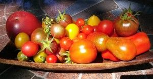 Looking for Heirloom Tomato Plants in Coeur d'Alene, ID? We have them! More than 25 types for sale at our urban garden.  http://thecoeurdalenecoop.com/heirloom-tomato-plants-for-sale-2014/