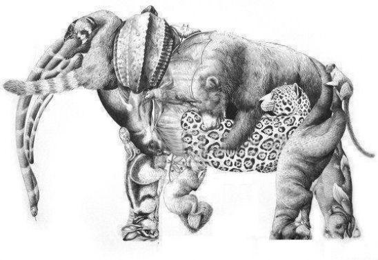 Acertijo óptico. ¿Cuántos animales ves? A descubrirlo...