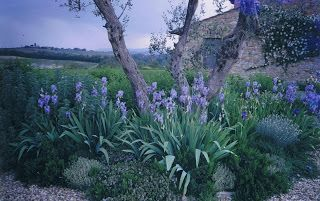 Bella Terra : Informal Tuscan Garden