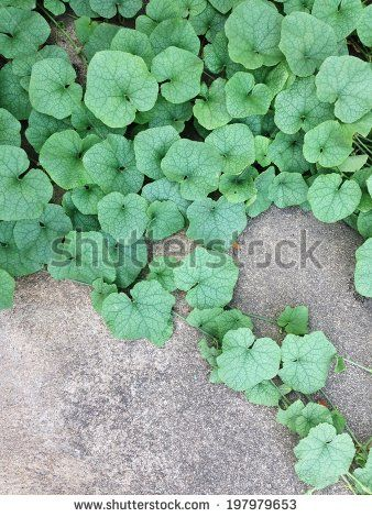 green leaves climb on the cement wall by lazybuffy, via Shutterstock